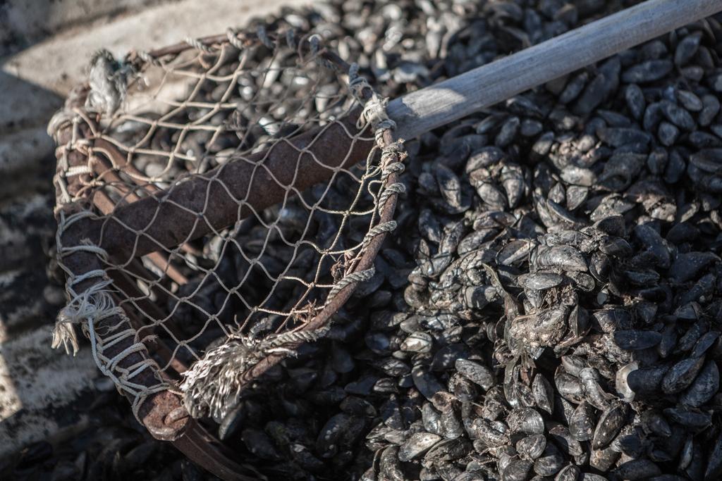 mussel rake