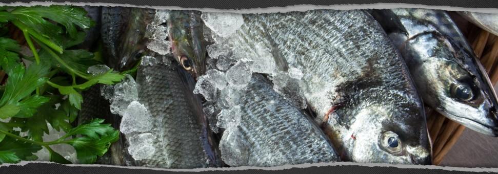 Fresh fish Conwy